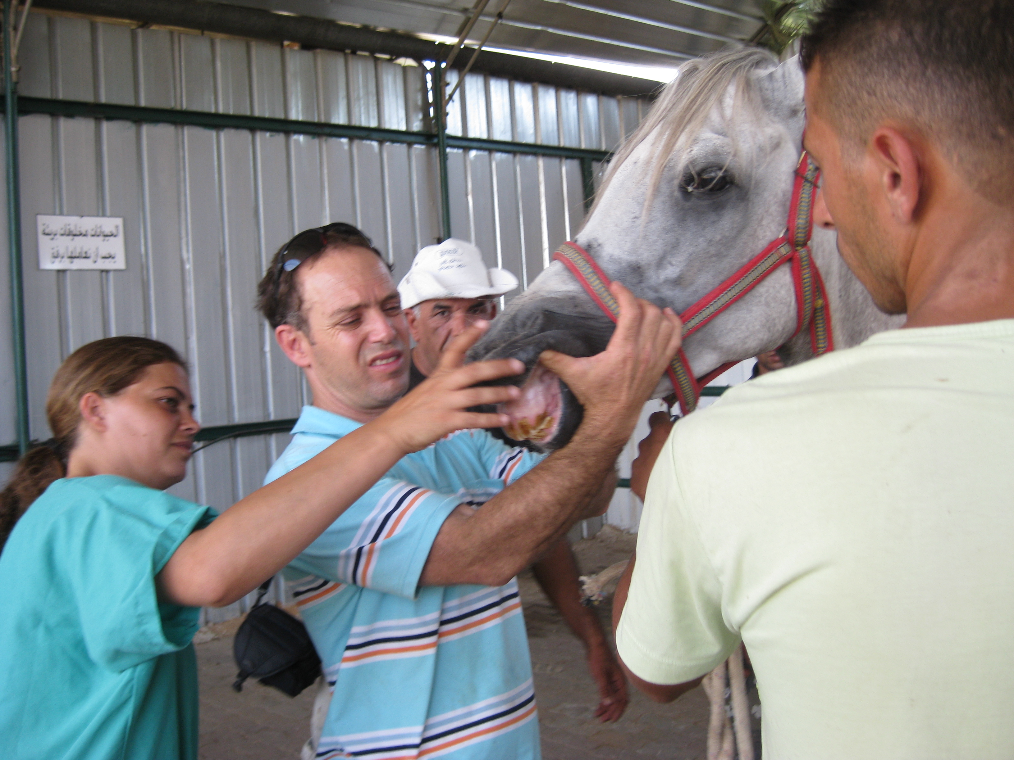 Free clinic for West Bank equines